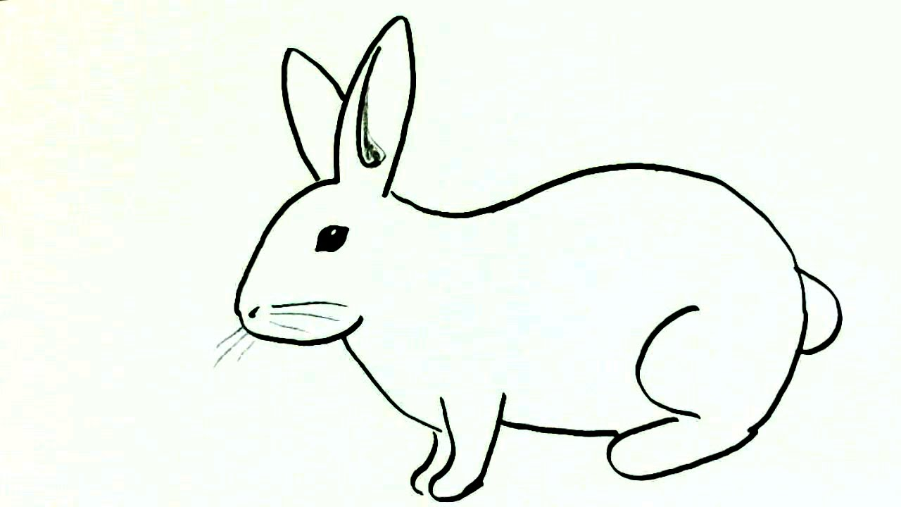 How to draw a rabbit or bunny in easy steps for children beginners