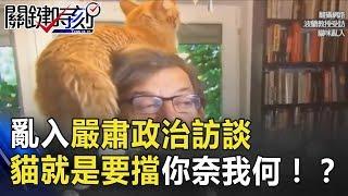 「媽!我上電視了」亂入嚴肅政治訪談 貓皇「就是要擋」你奈我何!? 關鍵時刻 20180709-3 朱學恒