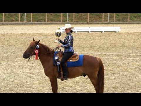 Missouri Foxtrotter  3 Gait Performance Class-Equitana Open Air 2019