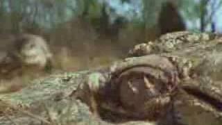 The  crocodile is very fast