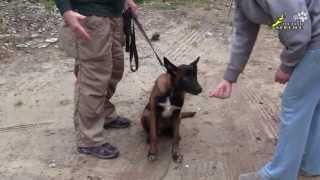 Дрессировка собак, как отучить щенка брать корм у чужих людей(http://www.walkservice.ru/Forum - для ОБСУЖДЕНИЙ и вопросов, и не забывайте ставить НРАВИТСЯ и ПОДПИСЫВАТЬСЯ. Отучение..., 2013-09-23T20:47:05.000Z)