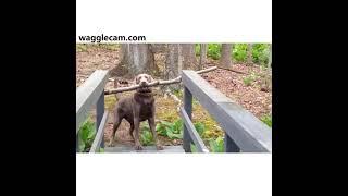 Pets Vs. Nature: A Funny Compilation
