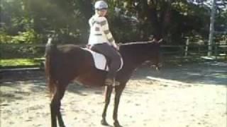 Horse poops