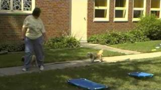 Small Dog Training - Off Leash Obedience - Buffalo Ny