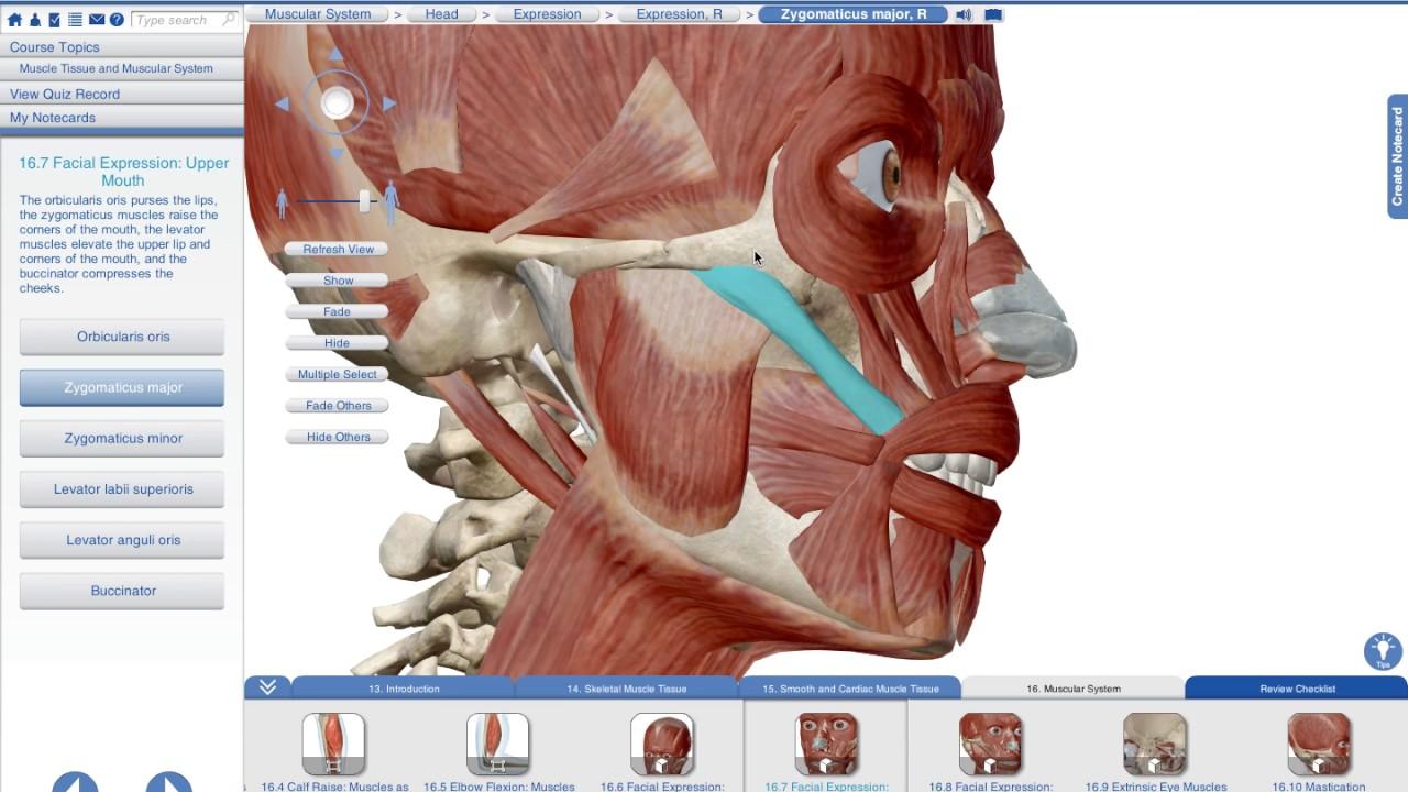 Bio Ii: Muscular System Part B Anatomy - Lessons - Tes Teach