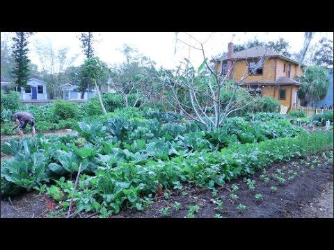 Grow Huge Organic Produce In Florida