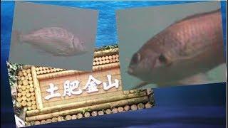 土肥港の水中探索 釣り場案内人サトシ!