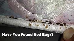 Denver Bed Bug Exterminator Heat Pest Services