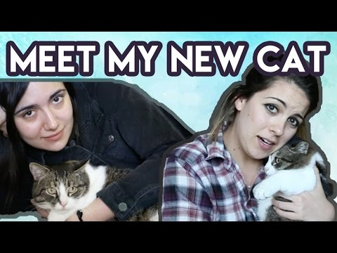 I GOT A MUNCHKIN CAT  (feat. Safiya Nygaard) • Pets 101