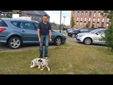 Zindelijkheidstraining - Puppy Cursus Hondenspecialist Arnoud Busscher