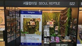 2019 월드 렙타일 페스타 with 펫서울amp카하엑…