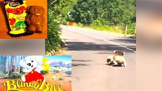 Ozzy Man Reviews: Koala Fight