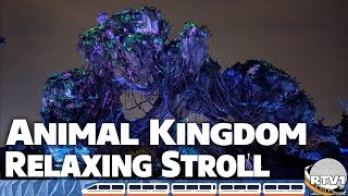 Disney's Animal Kingdom - Nearly Empty Park - Pandora to Exit Relaxing Stroll - 4K Low Light