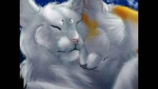 Коты воители без тебя жизни нет