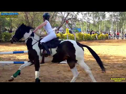 HORSE JUMPING RELAY - Annual Equestrain Games