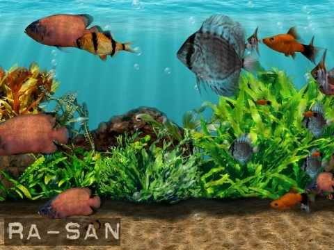 Wallpaper Persib 3d 3d Fish School Screensaver Youtube