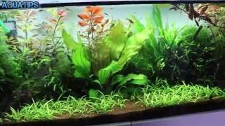 Como eliminar algas con Agua Oxigenada || AquaTips