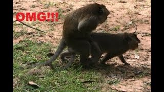 Download Amazing Monkey Meeting, Funny Monkey Meeting Mp3 and Videos