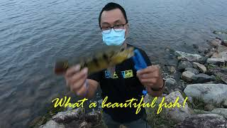 Fishing Lower Seletar Reservoir in the afternoon to evening and exploring Springleaf Nature Park