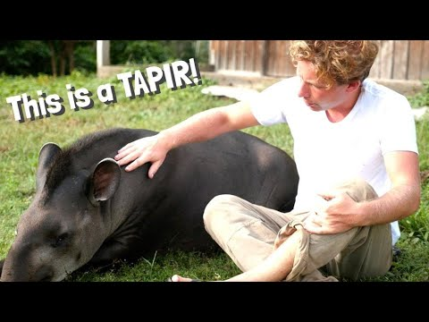 Behind the Scenes of our Anaconda Documentary ft  Tapir