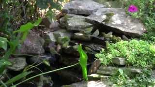 Warbler Water Wonderland