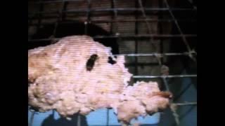 Millbank Fur Farm | Ontario, Canada | undercover footage