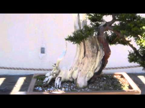 Beautiful Bonsai Trees 2