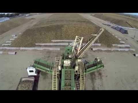 Sugar Beet Harvest 2013