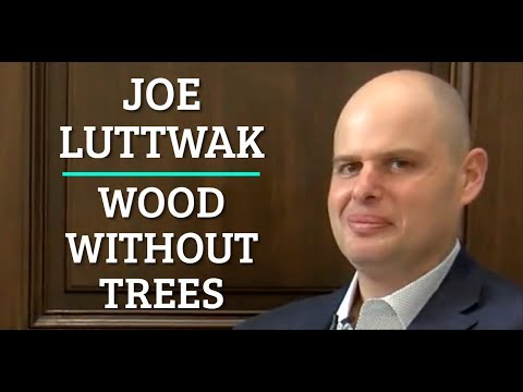Wood Without Trees - Joe Luttwak from Lingrove [Indie Bio]
