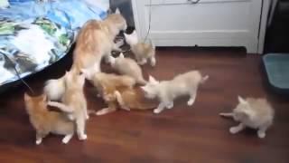 ШУХЕР! Всем в укрытие! Котята прикол!