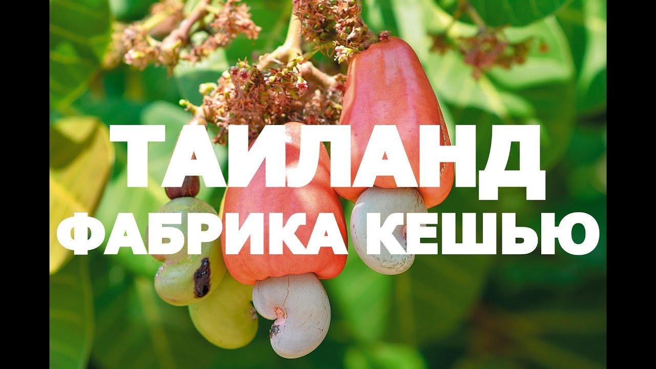 Богатые белками и витаминами орехи кешью можно купить не только в стране их непосредственного произрастания (бразилии), но и в москве. Они.