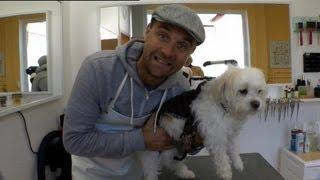 Der Hundesalon | Euromaxx Tretroller-Serie: 06