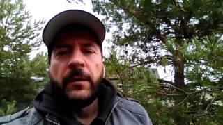 КХЛ, прогноз на матч СКА - Динамо Москва и ЦСКА - Локомотив
