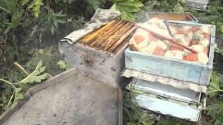 пустая рамка - индикатор закорма пчел в зиму ( обновление 30 октября 2014 года )