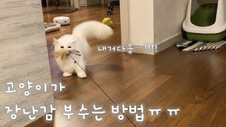 [고양이가 장난감 부수는데까지 필요한시간은? feat.…