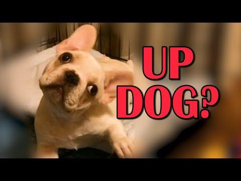 Up Dog Compilation || Funny Animal Videos
