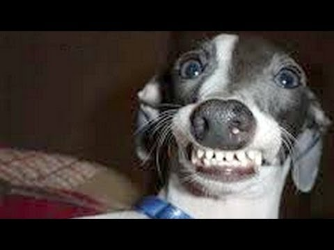 Dogs Making Funny Faces Funny And Cute Dog Compilation Youtube