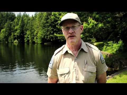 Go Fish BC: Colliery Dams Urban Fishery