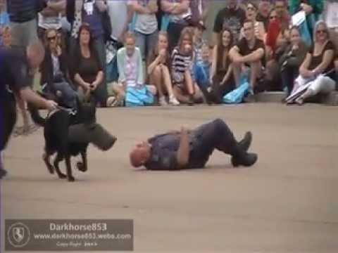 South Wales Dog Training Academy