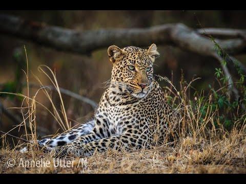 Fotosafari Kenya med Annelie Utter