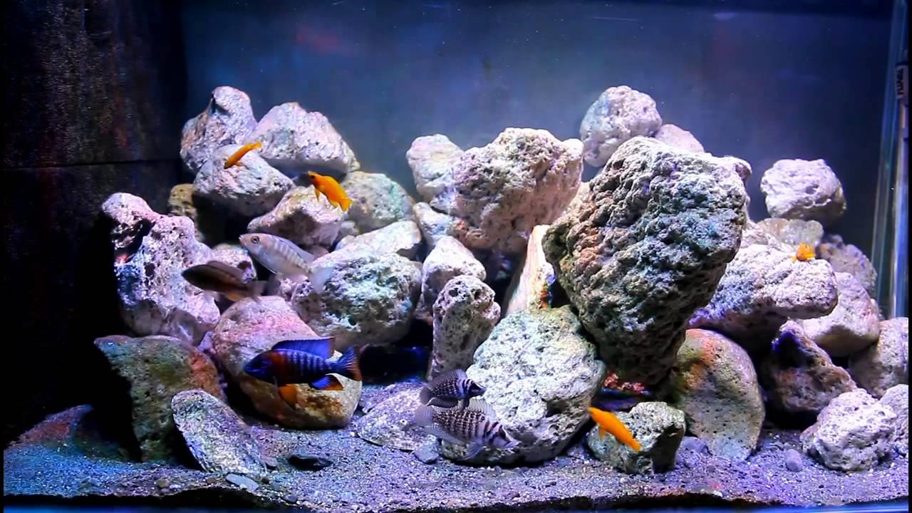 Freshwater aquarium fish that look like saltwater fish - Freshwater Aquarium Fish That Look Like Saltwater Fish
