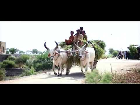 Dairy breed selection ASLP Dairy Project video documentary Sindhi language