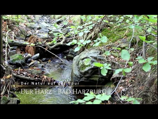 Mein erster Film - Der Harz