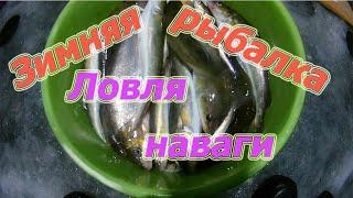 Зимняя рыбалка ловля наваги на реке Майха Приморский край 2019