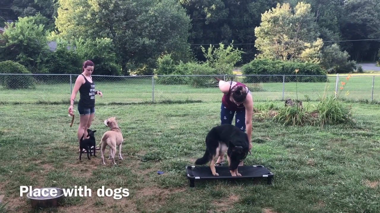 how to train a dog to come off leash