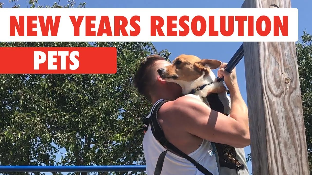 New Years Resolutions Pets