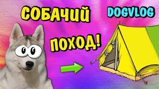 СОБАЧИЙ ПОХОД С ПАЛАТКАМИ! МАСЯ ПРОТИВ! Говорящая собака