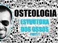 Sistema Esquelético - Estrutura dos ossos longos (Parte 1/2) - Anatomia Humana - VídeoAula 006