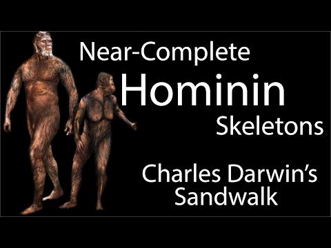 Near-Complete Hominin Skeletons
