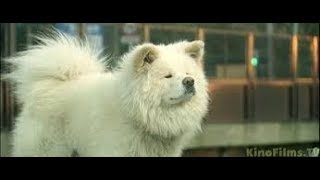 ДОРАМА Фильм о собаке-не уступает Хатико    ВАСАО